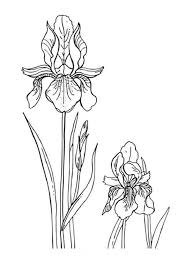 Iris Flower Coloring Pages 7