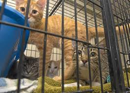 Pumpkin Patch Yucaipa Hours by Here U0027s How You Can Adopt A Pet For Free In Redlands U2013 Redlands