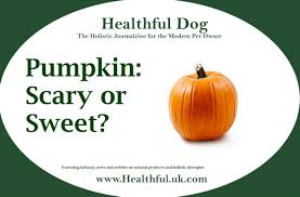Dog Constipation Treatment Pumpkin by Pumpkin Scary Or Sweet Healthful Dog