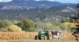 Hillcrest Farms Pumpkin Patch by Picking The Perfect Pumpkin