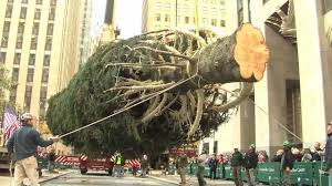 Rockefeller Plaza Christmas Tree Location by How The Rockefeller Center Christmas Tree Is Prepped Youtube