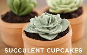 Cake Decorating With Succulent Design