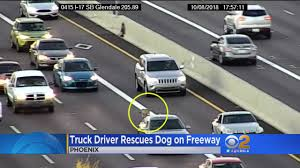 Truck Driver Rescues Dog That Darted Into Traffic On Highway « CBS ...