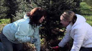 A Christmas Tree Miracle Trailerm4v On Vimeo