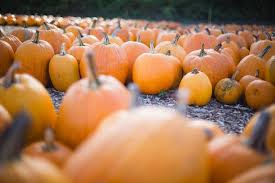 Simple Steps To Carving A Pumpkin by How To Carve The Perfect Pumpkin This Halloween In 7 Easy Steps