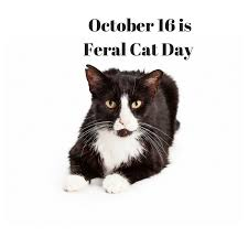 arlington cat clinic what is feral cat day cat clinic arlington va cat only