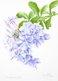 Margaret Best Discusses Color In Botanical Art Provides Tips For Informal Science Educators
