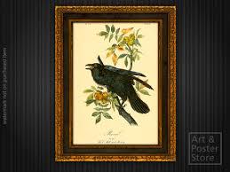 RAVEN Vintage Audubon Birds Of America Print