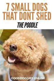 Dogs That Dont Shed And Smell by 103 Best Animaux Images On Pinterest Animals Wild Animals And