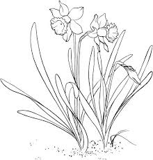 Daffodil Coloring Page To Use As An Embroidery Pattern Pages Printable