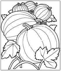 Pumpkin Vine Coloring Pages HalloweenFunky