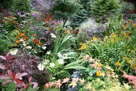 garden ideas winter bulbs buy daffodil bulbs tulip bulbs