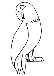 Animal Coloring Pages Gallery Free African Grey Parrot Wallpaper Wallpapers Download