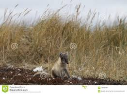 Animales En Peligro De Extinción El Oso Polar