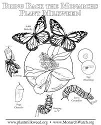 Monarch Butterfly Life Cycle Coloring Pag Unique Page