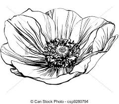 Black And White Picture Poppy Flower On The Stalk Stock Vector