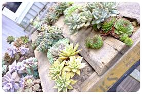 The Urchin Collective DIY Recycled Pallet Vertical Succulent Garden