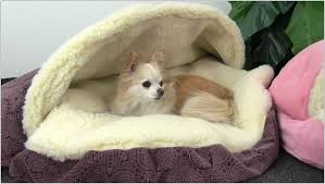 Snoozer Overstuffed Sofa Pet Bed by Cozy Cave Dog Bed Snoozer Pet Products Cozy Cave Dog U0026 Cat