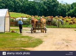 Amish Farmer Drives His Horses Back To The Barn After A Day In The ... Peabodys Barn Nov 5th 1955 Back To The Future 1985 Gif On Imgur By Chibiso Deviantart Su Rockbat Steven Geeks Out In Whalen Returns With Lynx Old Gophers Home Universe Review S2e20 Youtube Image Number 179png Wiki To The Short Promo 1 159png Hd 036png Cvce Game Mrs Wills Kindergarten