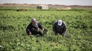 1 5 مليون دولار خسائر إغراق إسرائيل لأراض زراعية بغزة