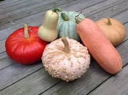 Cinderella Pumpkin Seeds Australia by Heirloom Squash Offer Novel Possibilities In Kitchen