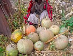 Types Of Pumpkins Grown In Uganda by Use Of Compost Sswm
