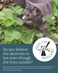 Alley Cat Advocates 16x20 Poster Do You Believe She Deserves To Live