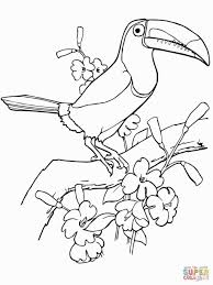 Toucan Coloring Page Coloring Pages Bird Coloring Pages