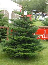 Best Smelling Christmas Tree Types by Christmas Christmas Tree Speciescolor Fir Photo Rick Bates List