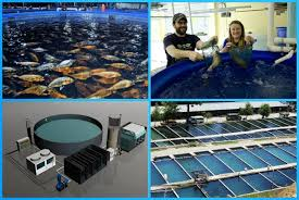Fish Farming   Business Ideas   Small Business Ideas   Pinterest ... Backyard Business Ideas With 21 Food You Can Start Chickenthemed Toddler Easter Basket Chickens Maintenance Free Garden Modern Low Landscape Patio And Astounding Small Wedding Reception Photo Synthetic Ice Rink Built Over A Pool In Vienna Home Backyard Business Ideas And Yard Design For Village Y Bmqkrvtj Ldfjiw Yx Nursery Image With Extraordinary Interior Design 15 Based Daily 24 Picture On Capvating