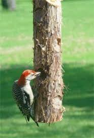 Suet Feeders and Suet Cakes from Wild Birds Forever