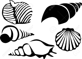 black and white seashell pictures mollusk seashell clipart 7