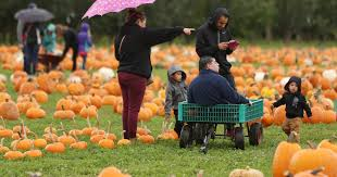 Heather Hill Pumpkin Patch by Find Your Perfect Pumpkin At One Of These Patches Near Salem