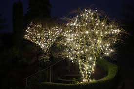 how to install lights on a tree light knights