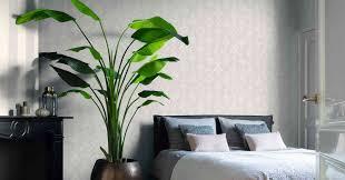 10 große zimmerpflanzen die garantiert eindruck schinden