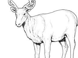 Caribou Deer Coloring Page Free Printable Pages