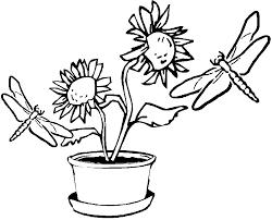 dessins de libellule à colorier