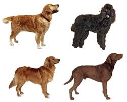 Best Hunting Dogs That Dont Shed by Best Hunting Dogs Ol Picks The Best Retrievers Pointers