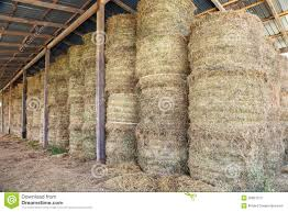 Hay Bale Stacked In Barn Stock Image. Image Of Horizontal - 26867373 3 Barns Lessons Tes Teach Hay Barn Interior Stock Photo Getty Images Long Valley Heritage Restorations When Where The Great Wedding Free Hay Building Barn Shed Hut Scale Agriculture Hauling Lazy B Farm With Photos Alamy For A Night Jem And Spider Camp Out In That Belonged To Richardsons Benjamin Nutter Architects Llc Filesalt Run Road With Hoodjpg Wikimedia Commons Press Caseys Outdoor Solutions Florist Cookelynn Project Dry Levee Salvage