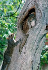 Pumpkin Patch Cyril Oklahoma by 1370 Best Squirrels Images On Pinterest Squirrels Animals And