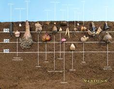 planting bulbs information read this in the fall plantology