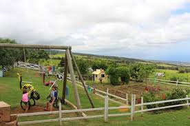 Pumpkin Patch Kula Hawaii by A Day At The Farm In Upcountry Maui Mauiwatch
