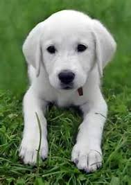 featured dog breeds
