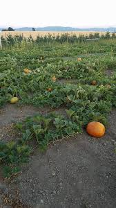 Greenbluff Pumpkin Patch Address by The Rickey Ranch Home Facebook
