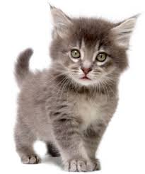 popular cat names cat names place popular cat names