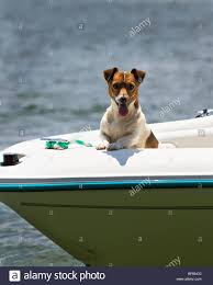 A Jack Russell Dog Is Riding In The Bow Of A Ski Boat Stock Photo ... Jack Russell Gracie Sold To Chris Dearmon Snow Creek 1813 Best Triers Images On Pinterest 743 Russell Long Haired Jack Trier Puppies For Sale In Kent Google The Russellcolbath Historic Homestead Site The White Mountains New Hampshire Kancamagus Highway Northern England Villages Cute Trier Dog On Stock Photo 574920391 Shutterstock Farm Photos Images Alamy Male Teacup Chihuajack Russellix Lantern Pictures Jackhua 1588