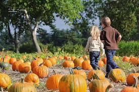 Pumpkin Picking Nj by Duffield U0027s Farm Corn Maze U0026 Pumpkin Picking Hayrides Sewell Nj