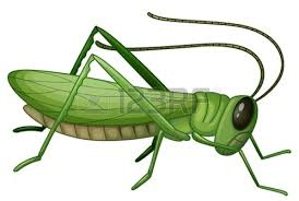 Common Green Grasshopper | Clipart Panda - Free Clipart Images Spoke Fieldtrip Grasshopper Review 2017 A Great Choice Of Business Phone Number Line2 Demo Youtube Cheapest Service You Can Take With Anywhere Run Your On A Cell Small Systems Mightycall Vs Comparison Best Reviews Vs Vonage Which Is Better For Why Is The Alternative To By Voip Experts Users Nw England Giant Grasshoppers Tropidacris Collaris Reptile Forums The Biggest Benefits Of Having Vintage Wiring Diagrams Whirlpool Insect Pest Hopper Png Image Pictures Picpng