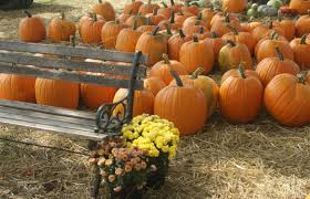 Pumpkin Patch Northwest Arkansas 2015 by Festivals Only In Arkansas First Security Bank