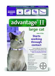 cats for advantage ii flea prevention large cats 9 lbs